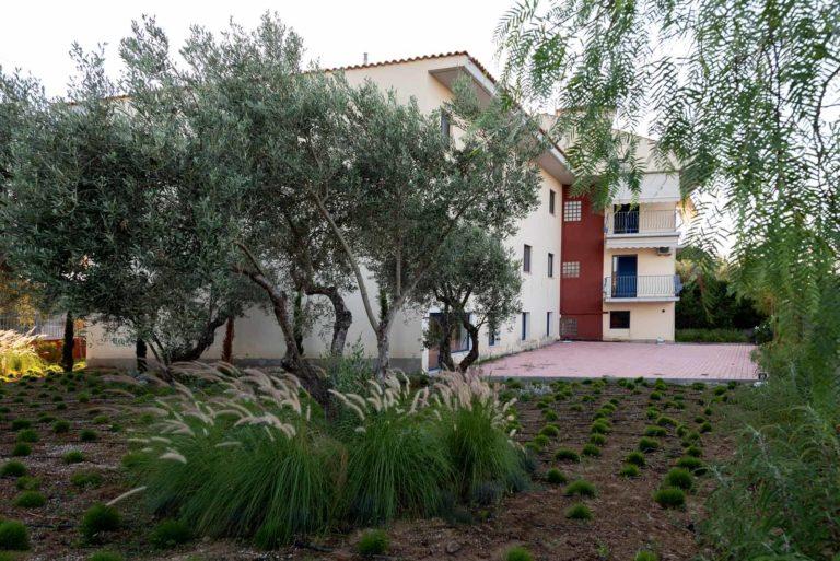 Olive-Trees1
